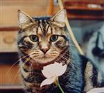 Bubba Kat with a flower in the sailboat - pre 1988