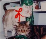 Bubba and Kitty Kat Cat in Sail Boat 1986 Christmas