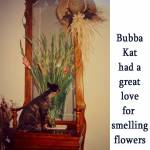 Bubba Kat Smells The Flowers