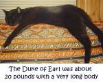 The Duke of Earl was a full grown kitty when he came to us