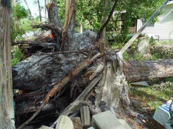 Hurricane Charley : The Clean Up Starts